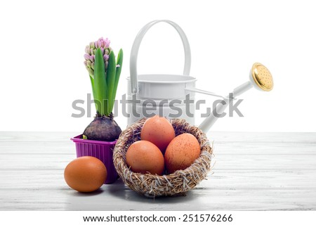 Easter still life with a hyacinth, watering can and yellow eggs in the nest, on white background. - stock photo