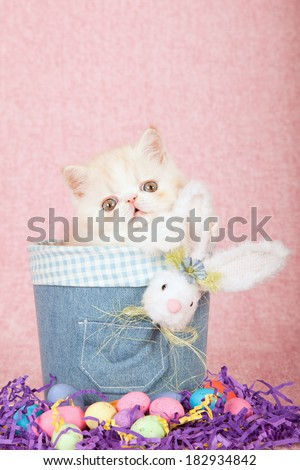 Easter theme Exotic kitten sitting in denim jean tube with fluffy Easter bunny, easter eggs on pink background - stock photo