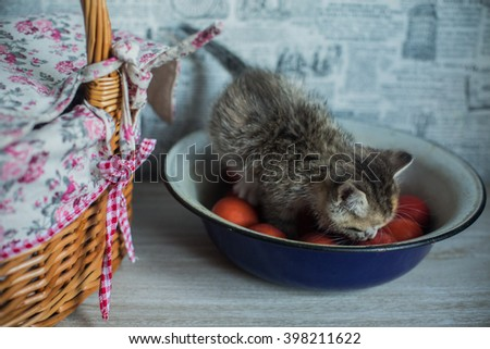 Easter theme  kitten sitting in large  woven cup and saucer  - stock photo