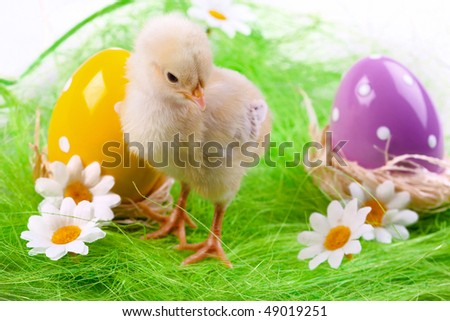 Easter young chick on grassland with eggs and flowers - stock photo