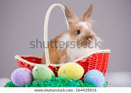 Easter Young Rabbit - Bunny posing next to easter eggs. Easter concept. Small depth of field - stock photo