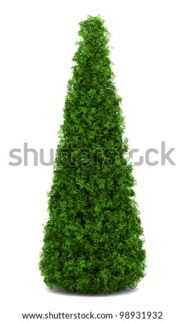 eastern arborvitae bush isolated on white background - stock photo
