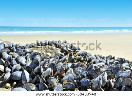 eatable mussels on a rock and sea - stock photo