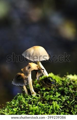 Eaten Autumn Fungi and the moss - stock photo