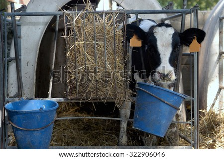 eating beef - stock photo