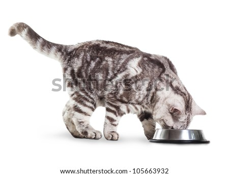 eating cat isolated - stock photo