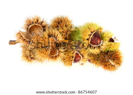 Eating chestnuts - isolated on white
