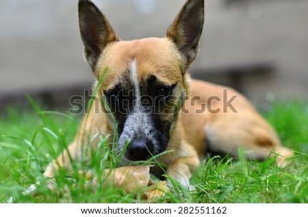 eating dog - stock photo