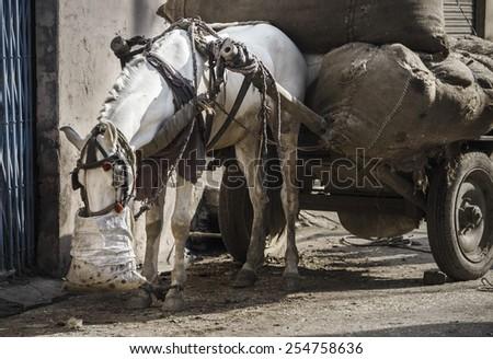 Eating horse on rural street - stock photo
