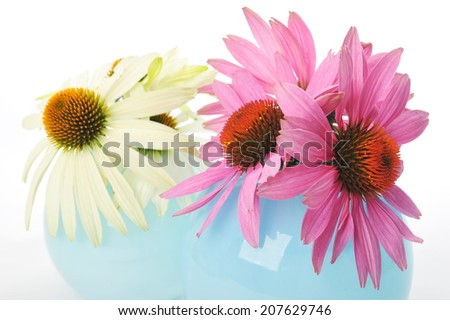 Echinacea flowers isolated on a white background  - stock photo
