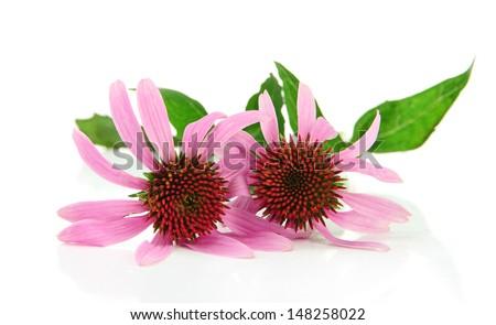 Echinacea flowers isolated on white - stock photo