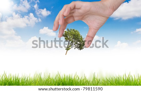 Eco concept : tree in hand  against the sun and the blue sky