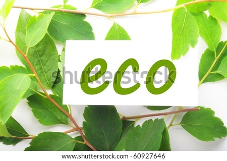 eco concept with word on nature still life - stock photo