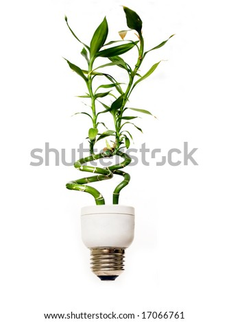 Eco light bulb with bamboo - stock photo