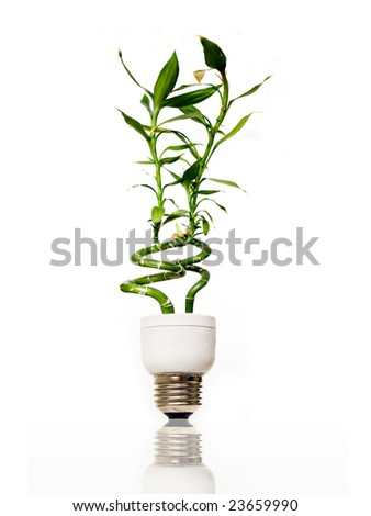 Eco light bulb with bamboo - stock photo
