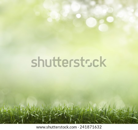 Eco nature / green and blue abstract defocused background with sunshine  - stock photo