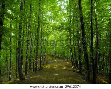 Eco-tourism trail through forest and up a mountain - stock photo