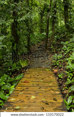 Ecological trail in the rainforest. Colon Island, Bocas del Toro, Panama, Central America. - stock photo
