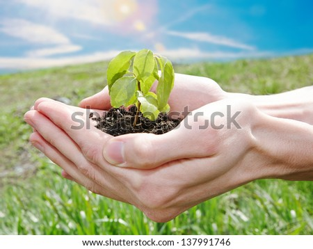 Ecology concept �¢?? male hands holding green plant at sunny day - stock photo