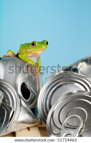 Ecology or environment image of a white-lipped tree frog on garbage - stock photo