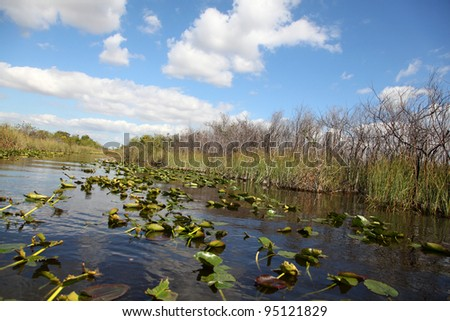 Ecosystem vegetation of the Everglades National Park - stock photo