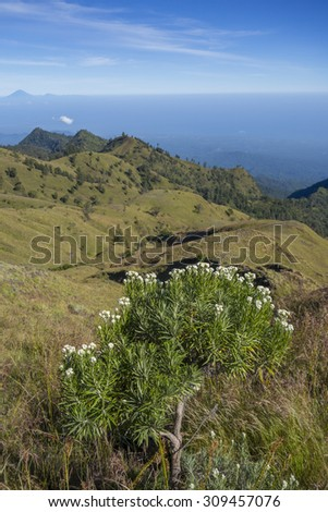 Edelweiss flower in the foreground and Mount Agung in Bali island. - stock photo