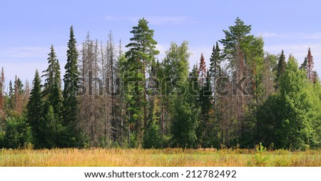 edge of the forest with dead trees - stock photo