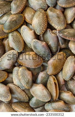 edible clams on belgian fish market - stock photo
