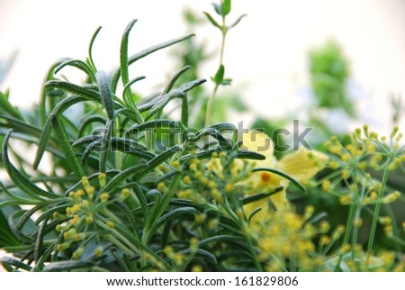 Edible flowers and leaves - stock photo