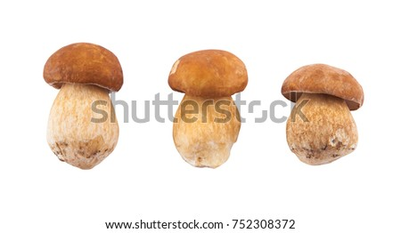 Edible mushroom isolated on white