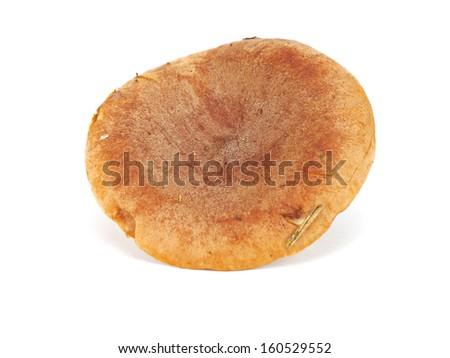 Edible mushroom Rufous Milkcap or the Red Hot Milk Cap or Lactarius rufus on a white background - stock photo