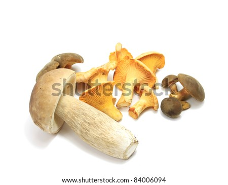 Edible mushrooms isolated over white - stock photo