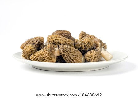 Edible mushrooms with excellent taste, grow in spring, Ptychoverpa bohemica  - stock photo