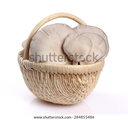 Edible mushrooms with excellent taste, Pleurotus ostreatus - stock photo