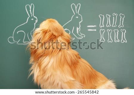 Education idea joke about dreamy dog studying mathematics - stock photo