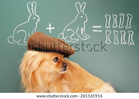 Education idea joke about dreamy dog studying mathematics. Focus on eyes of dog - stock photo