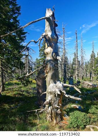 Effect of environmental pollution - a dead tree. Giant Mountains, Poland. - stock photo