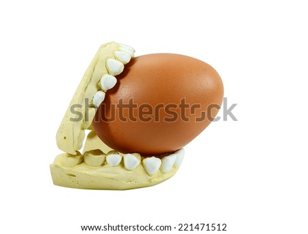 Egg hold in dental  model mould of teeth  - stock photo