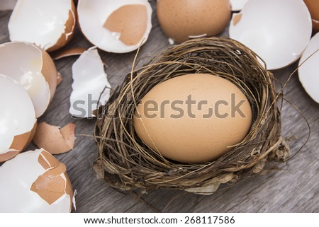 egg in nest surrounded with cracked eggshell  - stock photo