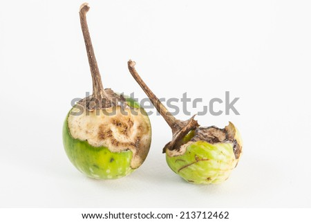 eggplant rot on white paper background - stock photo