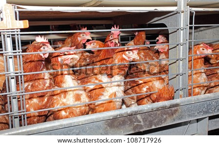 Eggs chicken farm - interior - stock photo