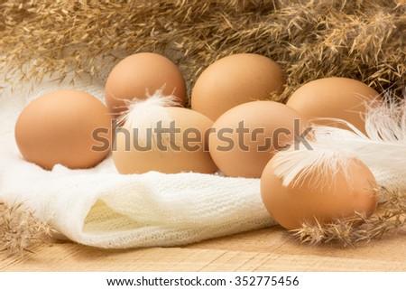 Eggs. Chicken Nest . - stock photo