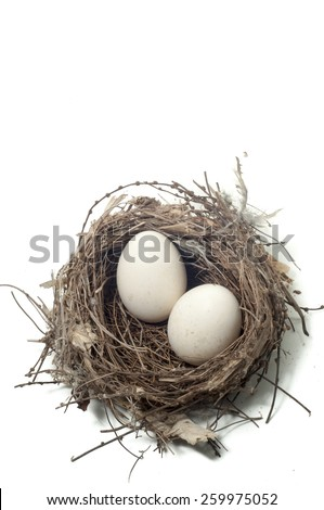 eggs in bird nest with white background