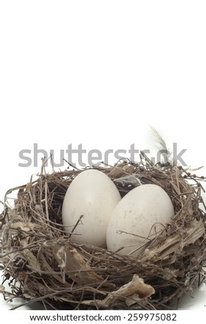 eggs in bird nest with white background - stock photo