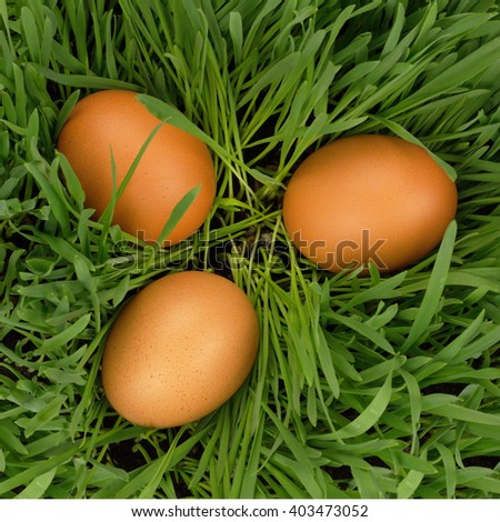 Eggs in grass - stock photo
