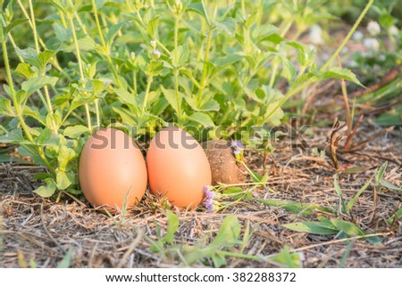 Eggs in meadow