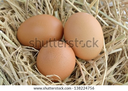 eggs in nest at chicken farm
