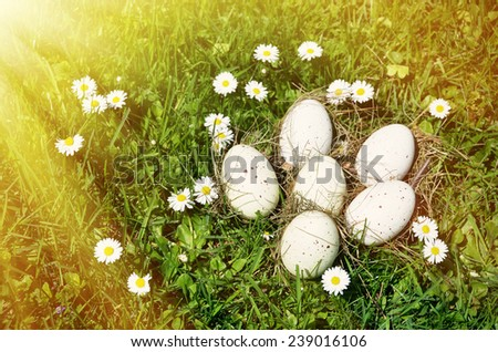 Eggs in the grass - stock photo