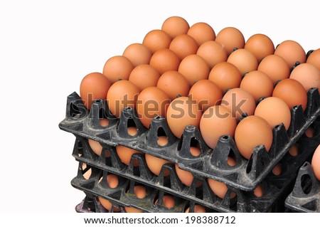 Eggs in tray - stock photo