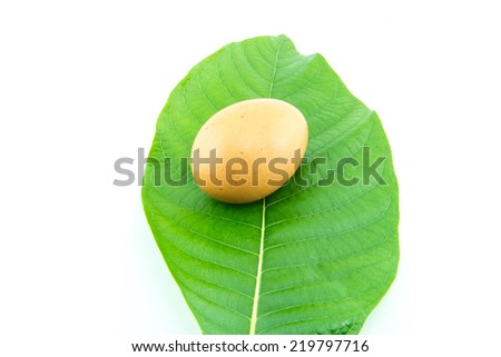 eggs on a background of green leaves